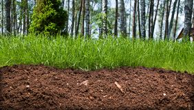 Slice of the soil. With trees and grass Royalty Free Stock Photo