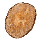 Slice of tree trunk isolated Royalty Free Stock Images