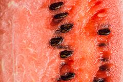 Slice of watermelon. Selective focus. Shallow depth of field stock photography