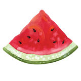 Slice of watermelon. Slice of watercolor watermelon.  vector Stock Image