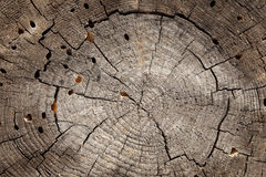Slice of wood Stock Images