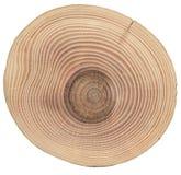 Slice of wood ash Royalty Free Stock Photo