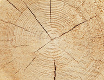 Slice of wood timber Royalty Free Stock Photos