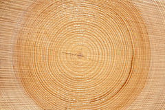 Slice of wood timber Stock Images