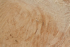 Slice of wood timber Stock Image