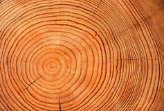 Slice of wood timber Royalty Free Stock Image
