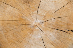 Slice of wood timber natural background Royalty Free Stock Photos