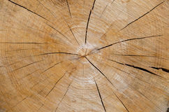 Slice of wood timber natural background.  Stock Photo
