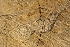 Slice of wood Stock Photography