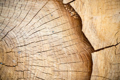 Slice of wooden log Stock Photos