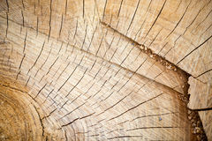 Slice of wooden log Royalty Free Stock Images