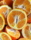 Sliced oranges Stock Image