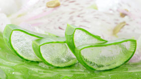 Sliced Aloe Vera. Stock Image