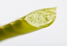 Sliced aloe vera leaf Royalty Free Stock Photography