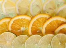Sliced citrus fruit . Slices orange, lemon and lime stock photos