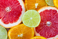 Sliced citrus fruits. Composition of sliced citrus - grapefruits, limes and oranges Royalty Free Stock Images