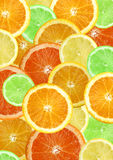 Sliced citrus fruits background Stock Photos