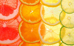 Sliced citrus fruits background Stock Image