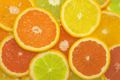 Sliced citrus fruits in different colors Royalty Free Stock Photography