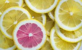 Sliced of Citrus Lemons stock images