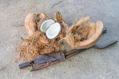The sliced coconut husks Royalty Free Stock Images