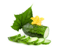 Sliced cucumber with leaf and flower isolated on a white background Royalty Free Stock Image