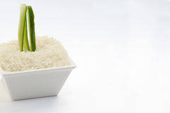 Sliced cucumber in rice amd white dish and white background Stock Photo