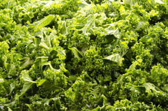 Sliced curly kale royalty free stock photography