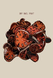 Sliced dry Bael Fruit , Hand drawn Vector.  Stock Photography