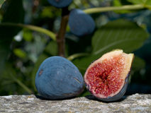 Sliced Fig. Outdoors on a wall with fig tree in background oof/shallow dof Royalty Free Stock Images