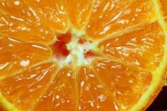 Sliced juicy orange macro. Royalty Free Stock Photo