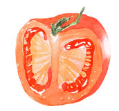 Sliced juicy red tomato - watercolor painting. Sliced juicy red tomato vegetable on white background - watercolor illustration vector illustration
