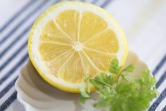 Sliced lemon. With herb on white dish Stock Photos