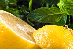 Sliced lemon and mint Royalty Free Stock Photos