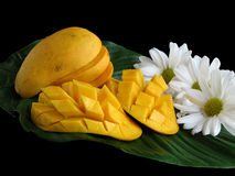 Sliced Mangoes On Leaf. Ripe cut mangoes on a leaf with flowers; black background royalty free stock photos