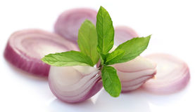 Sliced onion with mint leaves Royalty Free Stock Photo