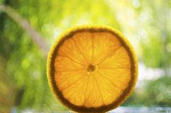 Sliced orange against bokeh green background Stock Images