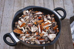 Sliced orange cap boletus in a skillet Stock Image