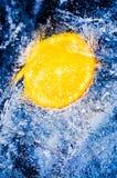 Sliced orange in ice Stock Image