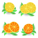Sliced orange and lemon Stock Image