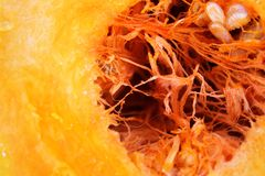 Sliced pumpkin with drops of juice, the core of the pumpkin royalty free stock images