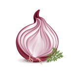 Sliced red onion with parsley Royalty Free Stock Photo