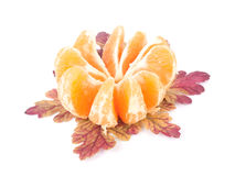 Sliced tangerine and leaves Royalty Free Stock Photography