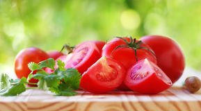 Sliced tomatoes  and cilantro Stock Images