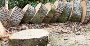 Sliced tree stock image