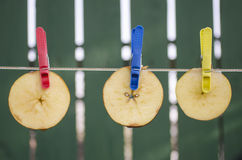 Slices of apples hang on the rope. To dry Royalty Free Stock Image