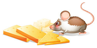 Slices of cheese with a mouse Royalty Free Stock Image