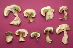 Slices of dry boletus mushrooms  on red background stock photography