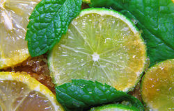 Slices of limes and lemons, leaves of mint and cane sugar Stock Image