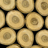 Slices of oak wood Royalty Free Stock Images